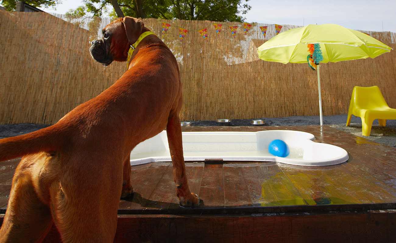 dog sniffing around built-in doggy paddle pool, shaped as a bone