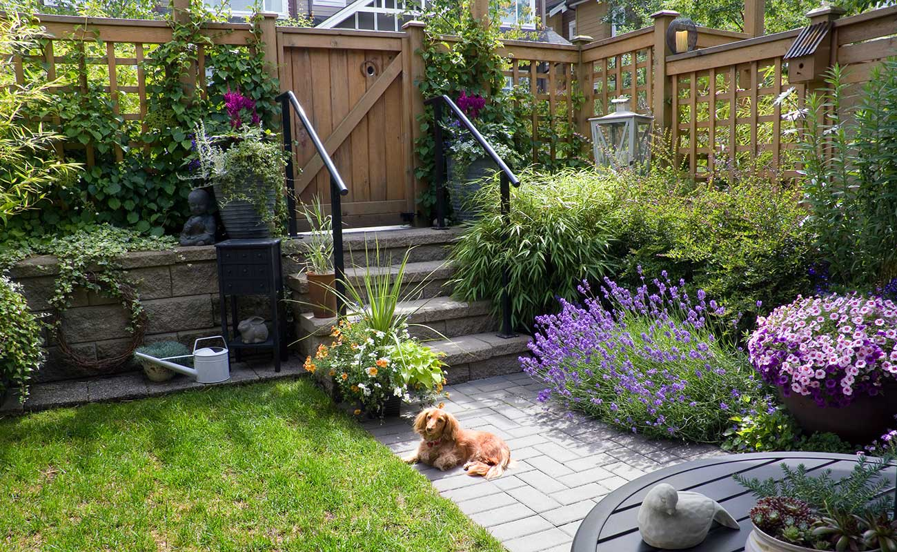 Costs for a basic pet friendly garden zones for Dog friendly landscape design