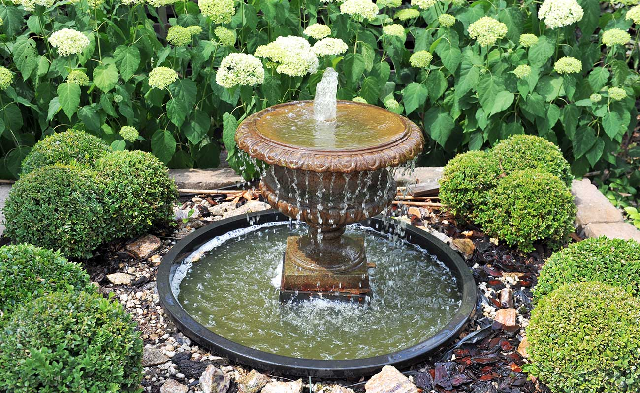 Picture of buxus planting with a fountain