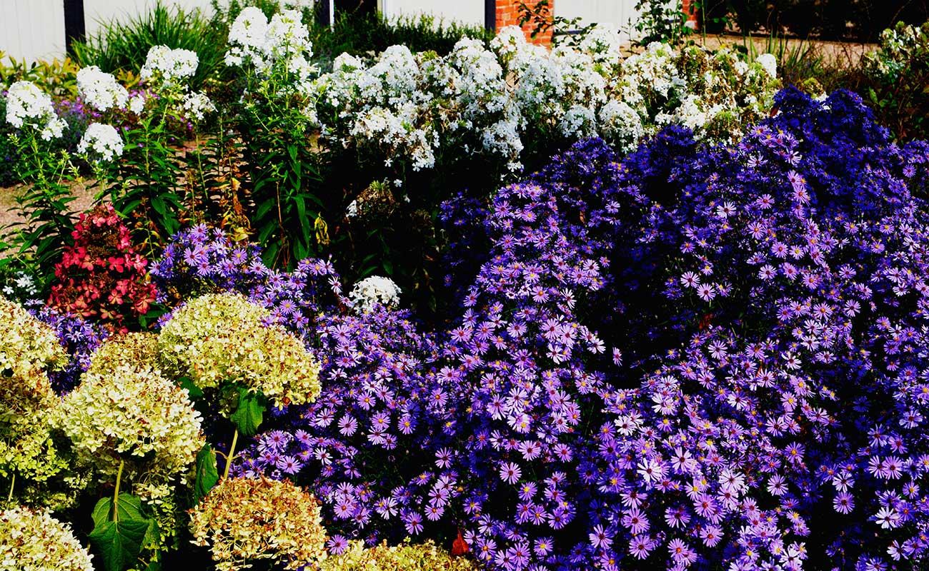 Rich flower bed showing off multiple colours