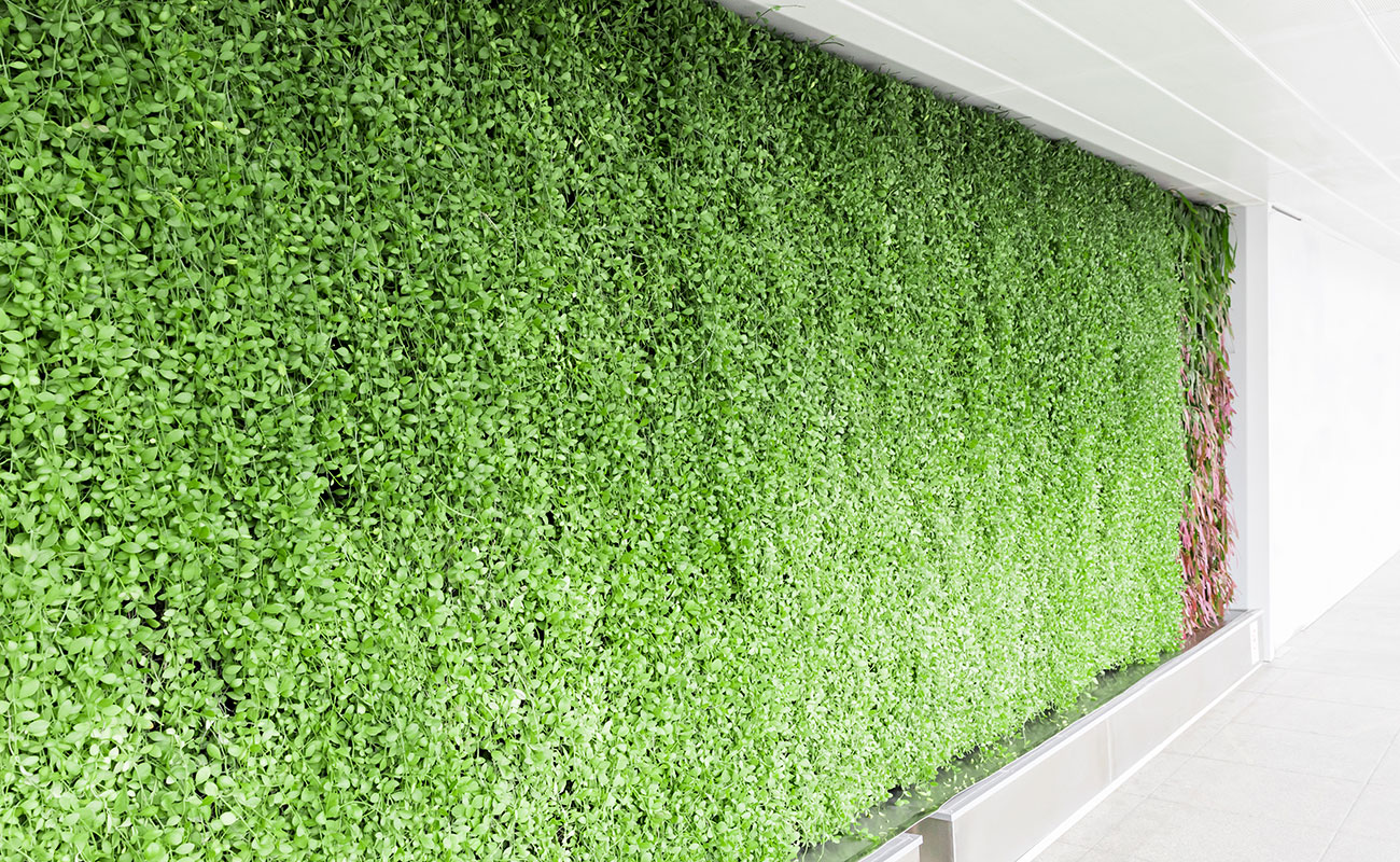 Living walls in corporate environment
