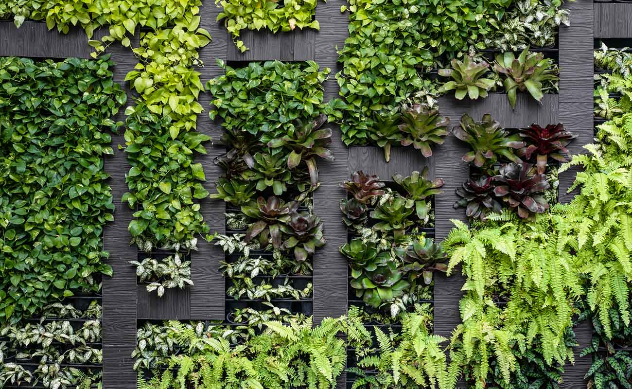 Living walls in lush style