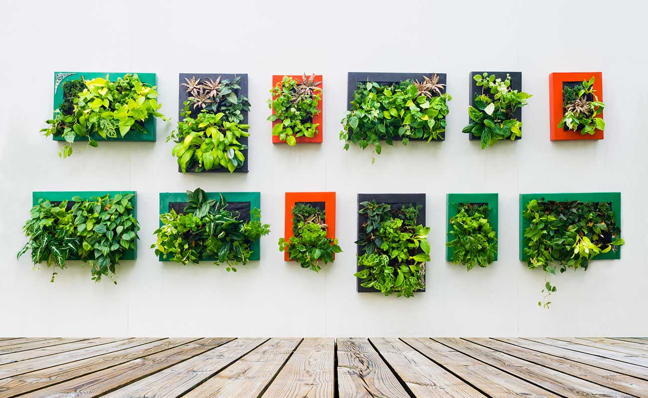 Living walls in pocket Style NZ