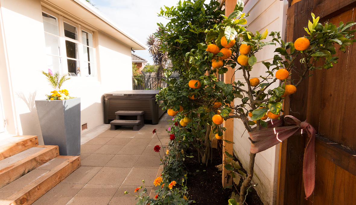 Mandarin tree and small part of the house