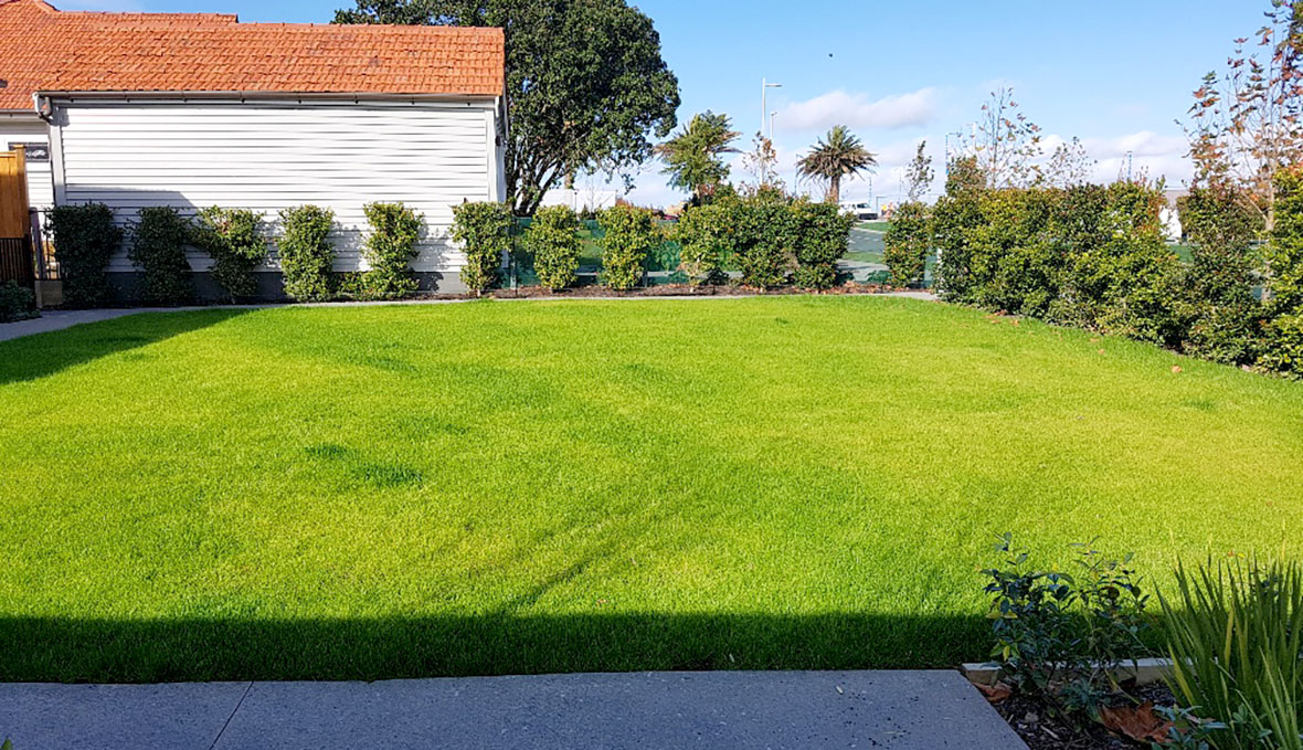 A hydro-seeding lawn for a backyard