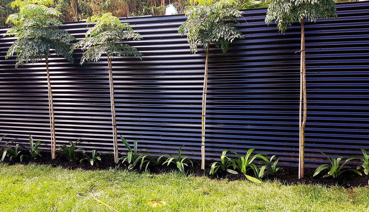 A new plant tree and new fencing