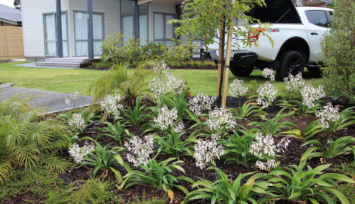 landscaping ideas for the backyard, Whangarei