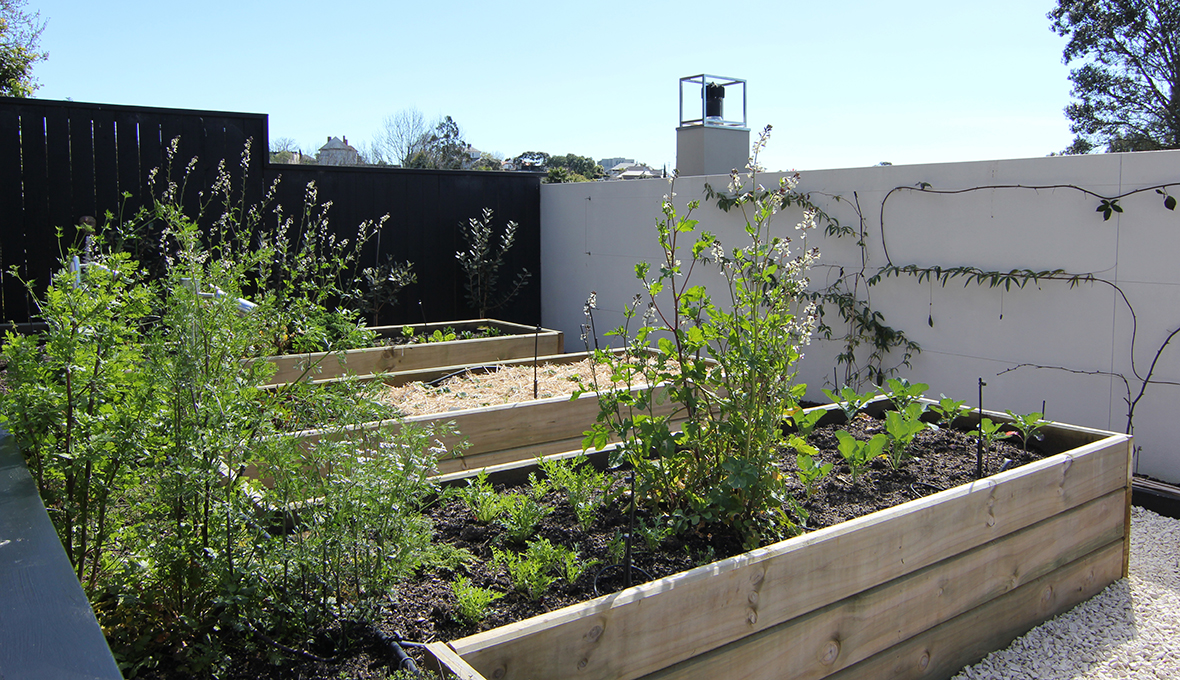 Zones landscaping remuera edible garden vegetables