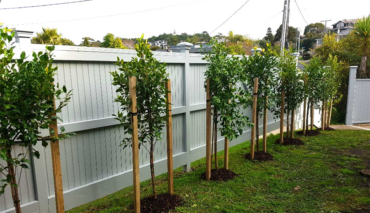 Campbells bay landscaping project by zones landscaping