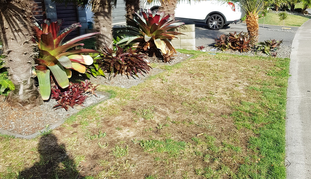 Lawn in papamoa rescued