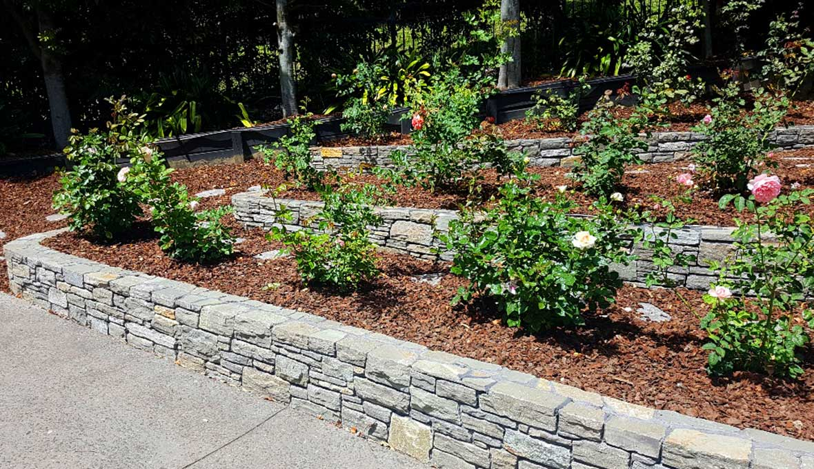 Rose Garden in Brown's bay project built by zones landscaping