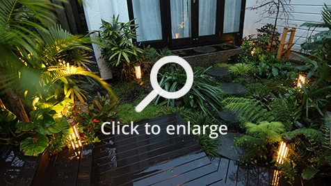 Zones landscaping small sub tropical garden night