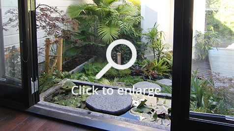 Zones landscaping small sub tropical garden waterlillies pond