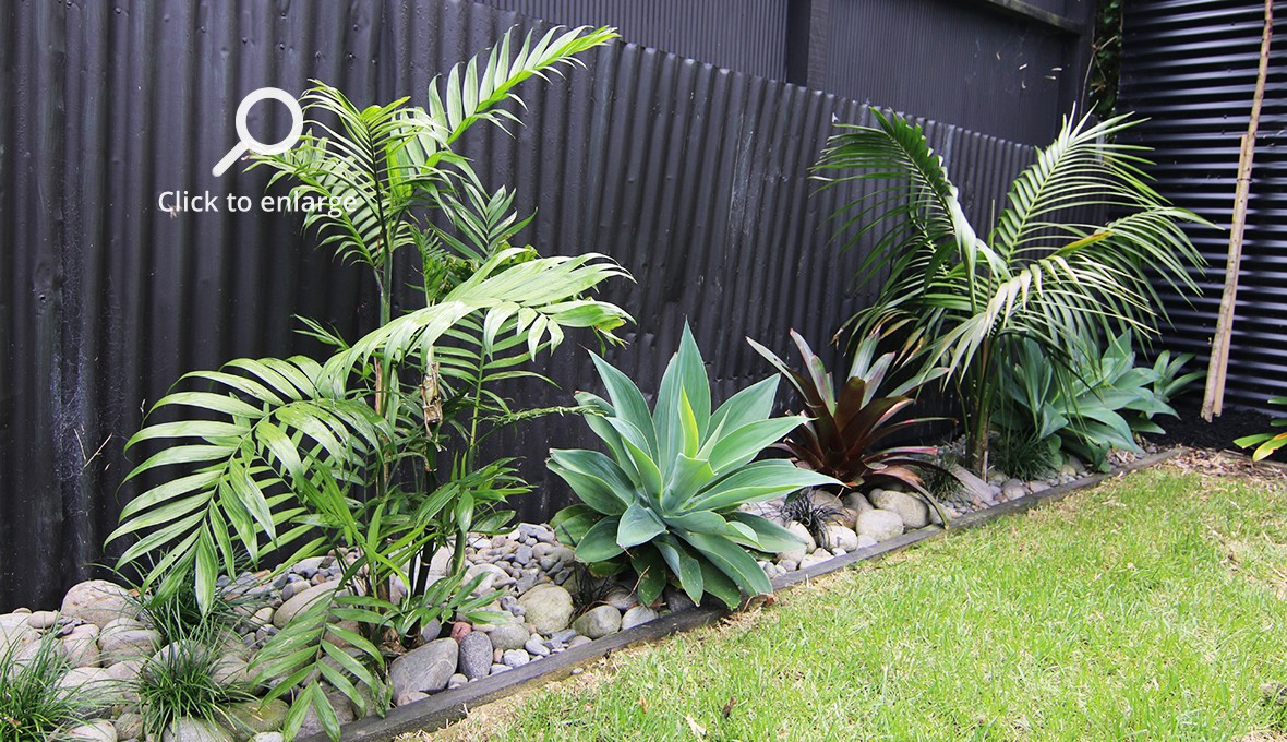 A low maintenance plants in a garden
