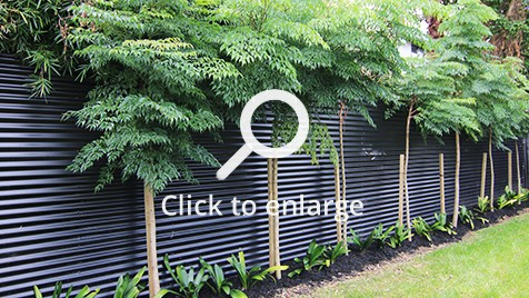 Neatly planted trees and plants next to a metal fence