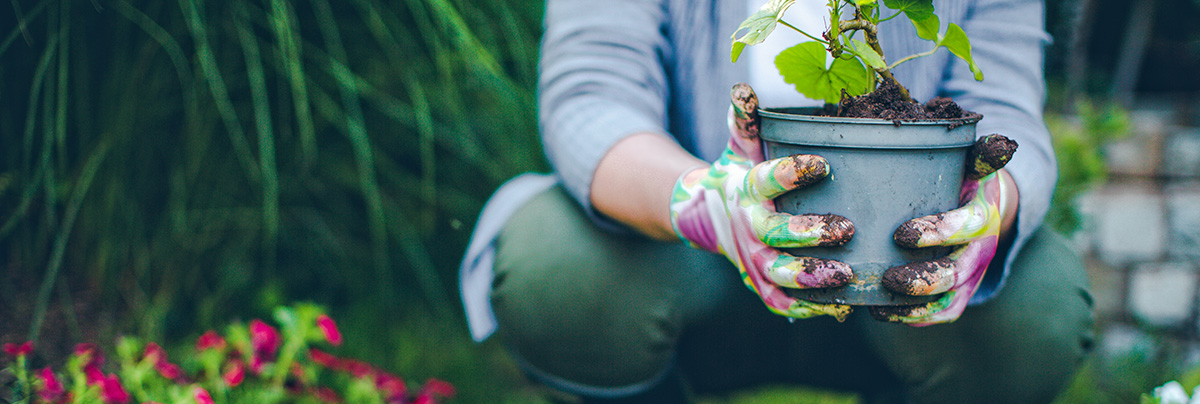 Woman holding a potted plant while gardening