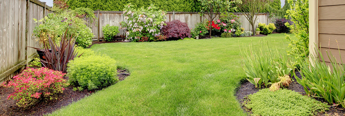 Well established lawn, with designated plant and grassy areas.