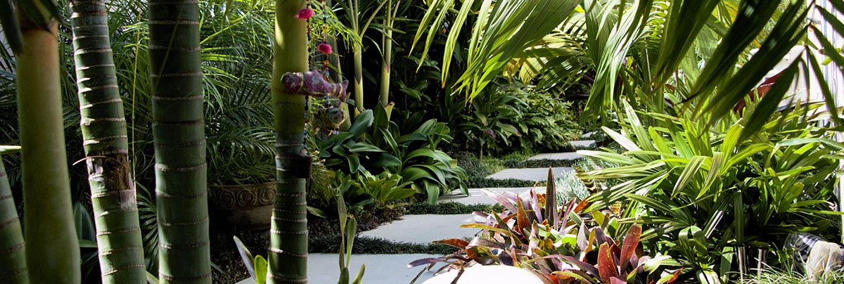 Subtropical garden transformation in Tauranga, New Zealand
