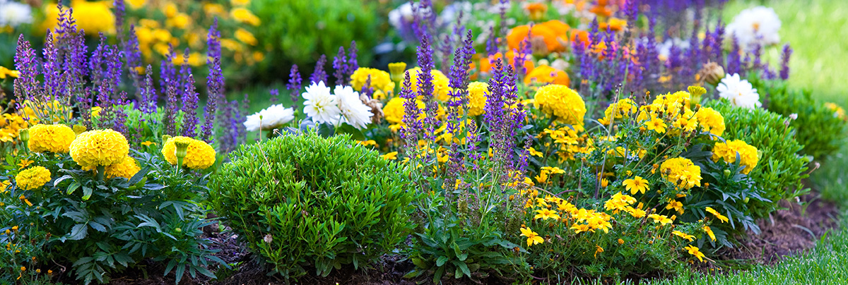 Companion planting zones for Gardening zones colorado