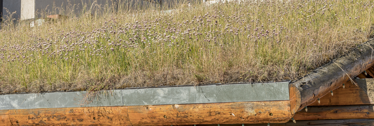 Green roofs and living roofs
