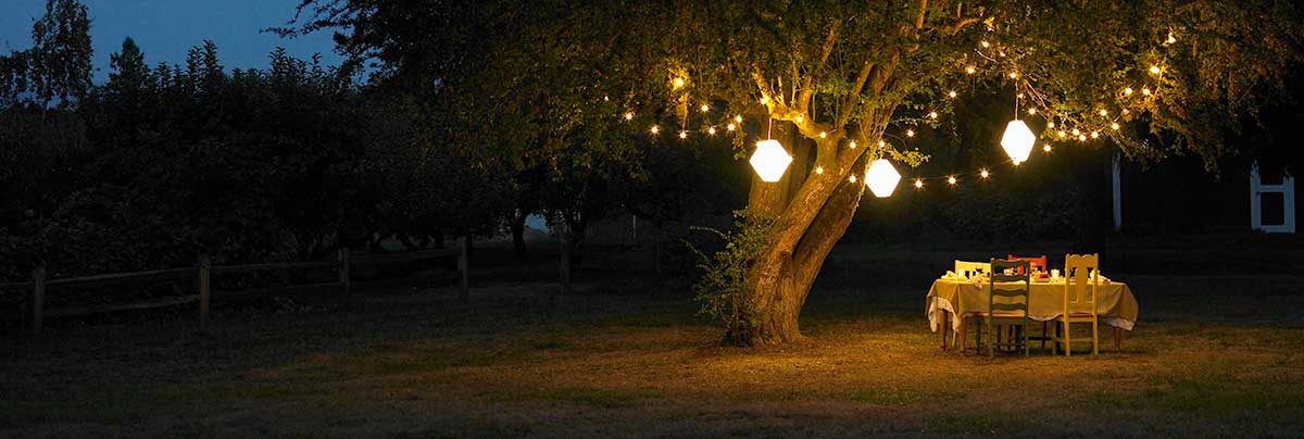 lights on a tree for romantic dinner