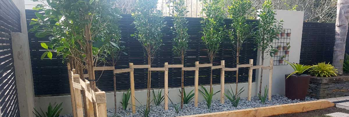 Tracey barker point chev planting and fence project