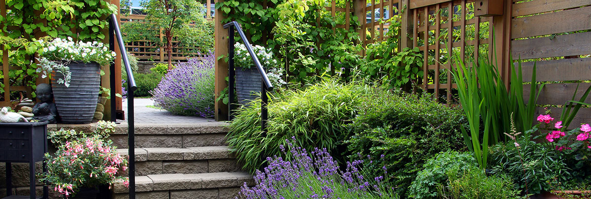 lush green garden with stairs in a backyard