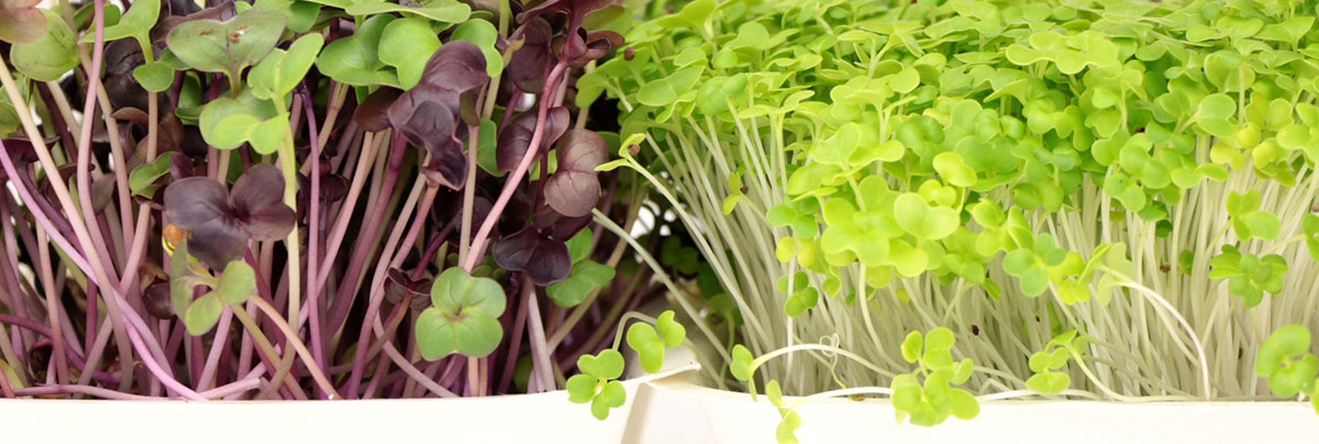 Grow your own garden with limited space