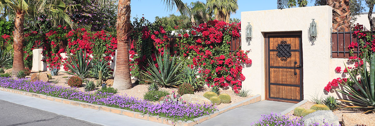 Xeriscaped low-maintenance garden in Palm Springs with different kind of cacti