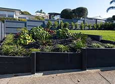 Case Study - Contemporary Tropical Landscape Design in Auckland