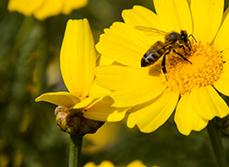 Article – How to create a bee-friendly garden