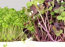 Article – Solutions for small gardens