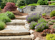 Article - Xeriscapes