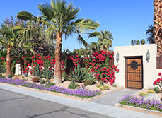 Article - What is xeriscaping and how can I achieve it in my garden?