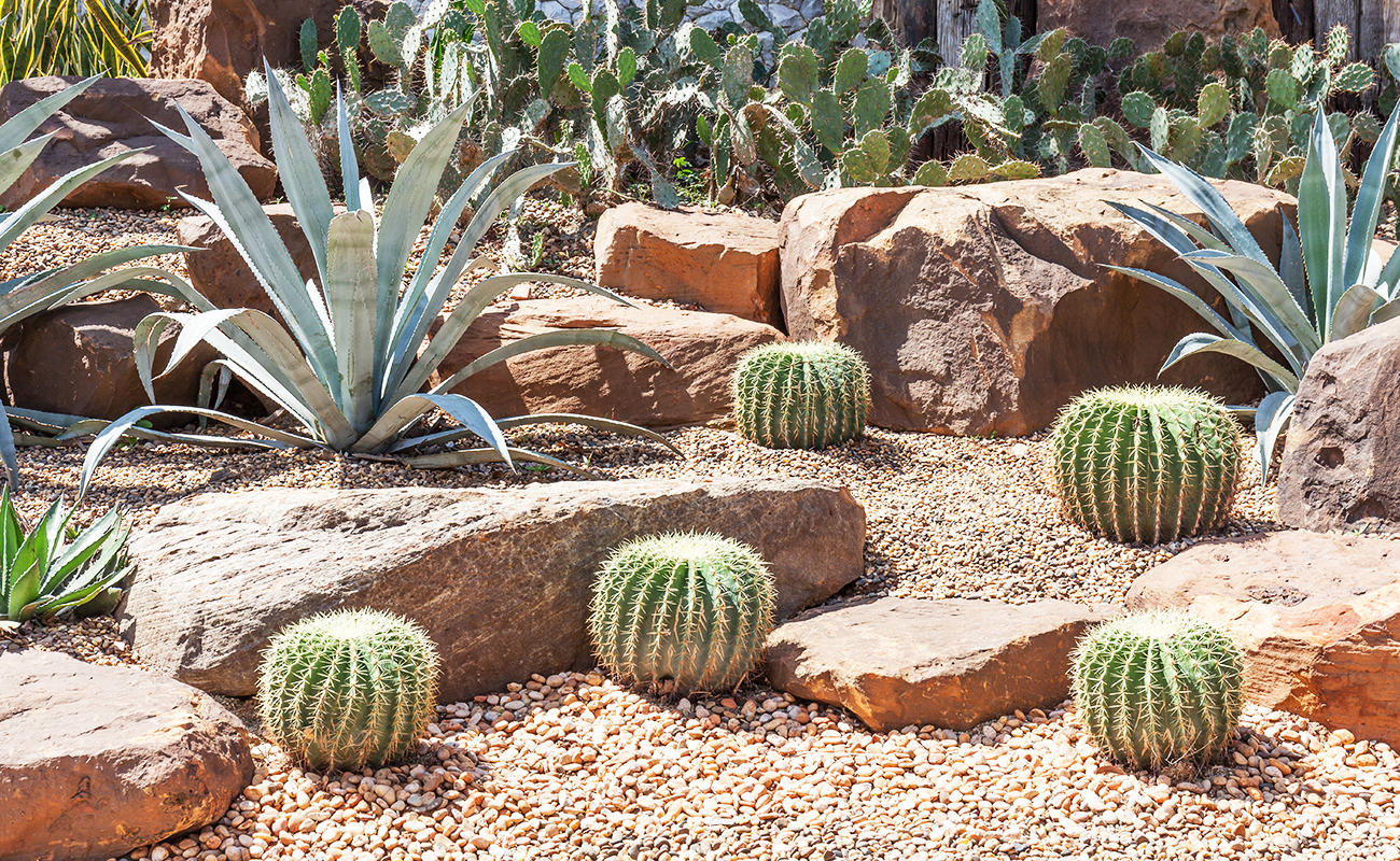 xeriscaped garden full of different kind of cacti
